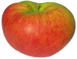 Blenheim Orange