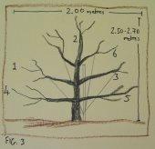 Fruit tree development, year 3