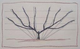 Fan tree, final configuration