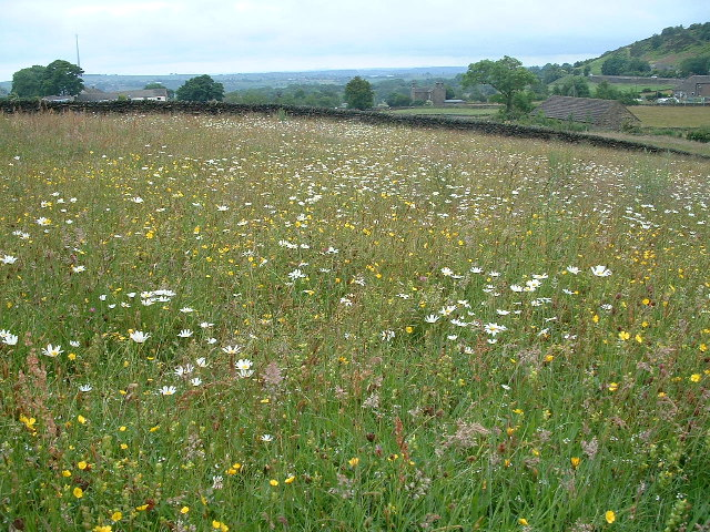 Wild flower meadow realenglishfruit for The meado