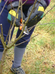 Pruning a young tree