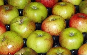 Storing apples for the winter