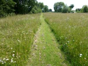 Wildflower meadow path, mown for access purposes
