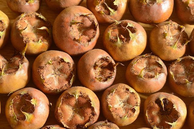 lima fruit in english medlar fruit