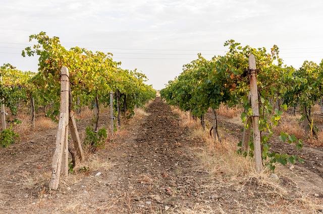 Bordeaux mixture a fungicide for fruit trees realenglishfruit - Bordeaux mixture ...