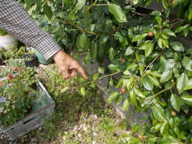 Where to cut the young, growing shoots