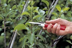 summer_pruning