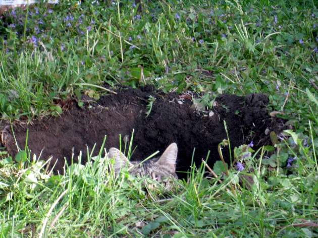 Tree planting hole