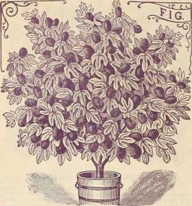"Image from page 133 of ""Childs' rare flowers, vegetables & fruits for 1895"" (1895)"