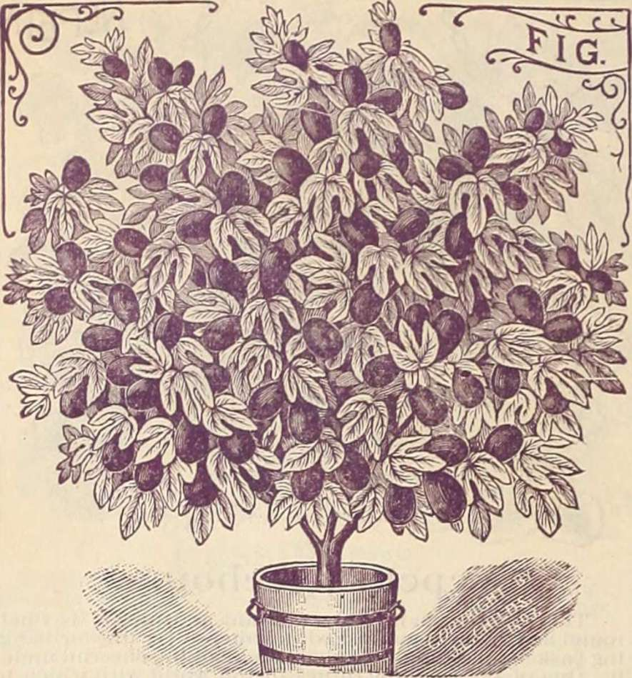 """Image from page 133 of """"Childs' rare flowers, vegetables & fruits for 1895"""" (1895)"""